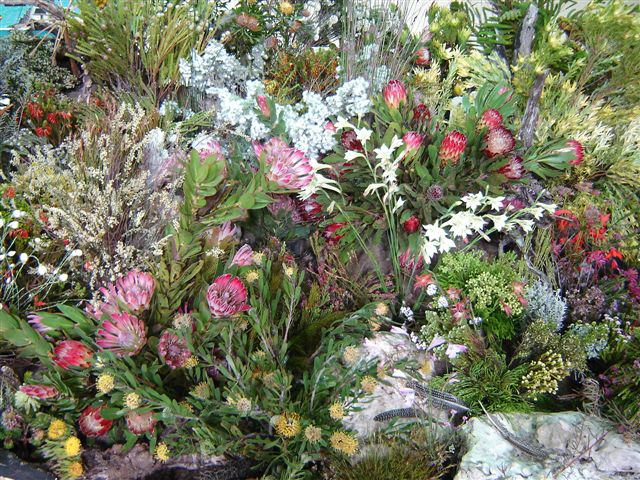 Indigenous flowers from the Cape Agulhas Fynbos biome